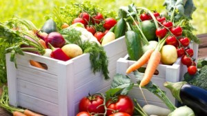 organic restaurant food